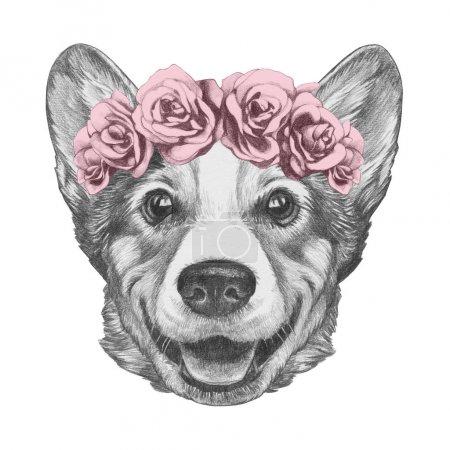 Photo pour Joli croquis portrait de chien Welsh Corgi en guirlande de roses, isolé sur blanc - image libre de droit