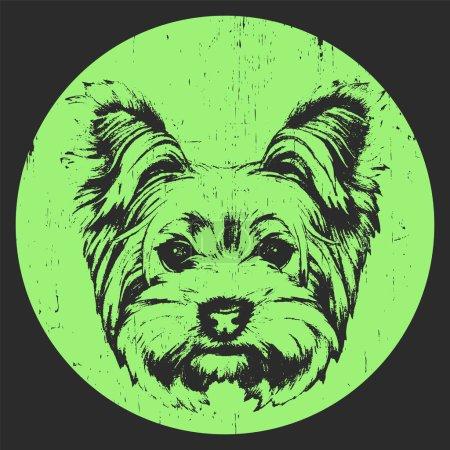 portrait of Yorkshire Terrier Dog