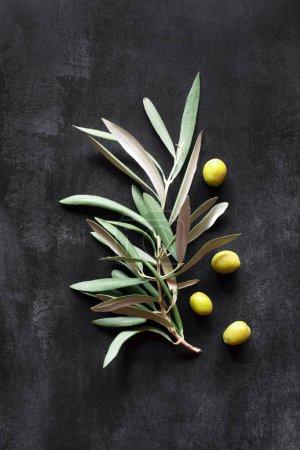 Olivenzweig auf einem Hintergrund