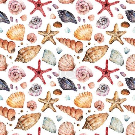 Watercolor  Beautiful seashells