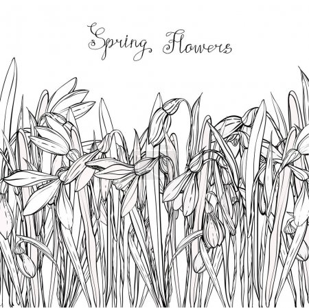 Snowdrops,coloring books for children and adults, black and white, ink, pen, leaves, buds, flowers, handmade,card for you