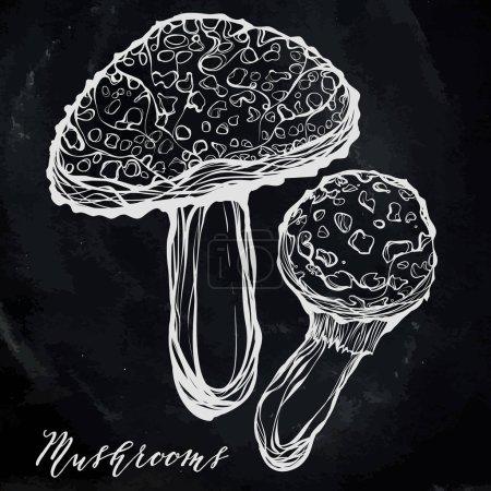PrintAutumn harvest, poisonous mushrooms