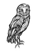 Barn owl Detailed drawing of a bird Vector illustration isolated on  background handmade