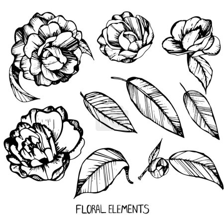 camellia, ink, pen capillary, handmade,coloring books for children and adults, leaves, flowers, buds,Set of floral elements for your compositions,flower collection,black and white