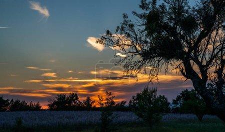 Photo pour Silhouette d'un grand arbre contre le coucher du soleil. Ciel orange au-dessus des arbres. - image libre de droit