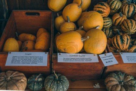 Photo pour Belles rangées de citrouilles affichées pour des vacances d'automne. - image libre de droit