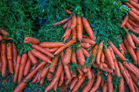 Photo for Local produce at the autumn farmers market in the city. Bunches of carrots on a market stall. Fresh and organic vegetables. Agriculture products. Seasonal harvested. Bio, healthy, vegetarian food. - Royalty Free Image