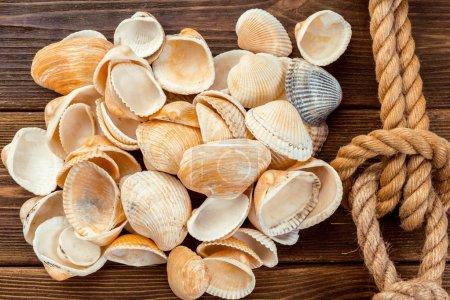 Seashells border on wood. Marine background.