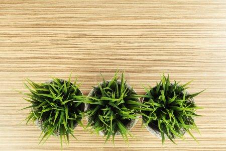 Green pot plants on table