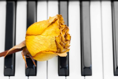 yellow rose on a piano keys