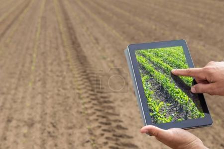 Agricultura inteligente. Agricultor usando tableta de maíz plantación. Agr moderno