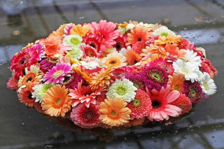 Composition of various gerberas floating in water