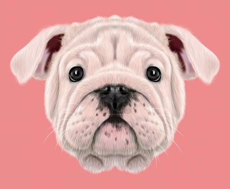 Portrait illustré du chiot Bulldog anglais