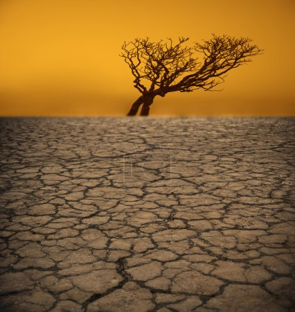 tree on cracked earth in desert
