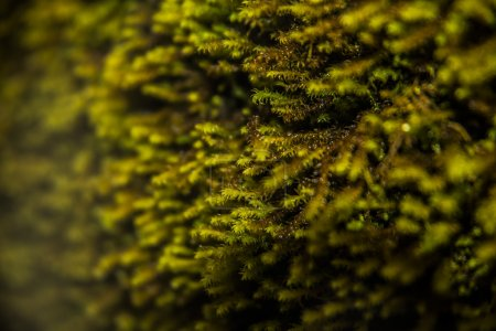 Close up view of green moss texture...