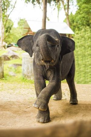 elephant baby dancing