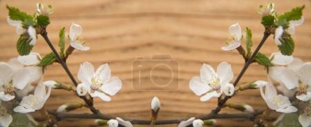 Apple or cherry blossom