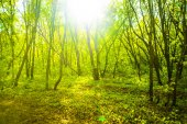 spring Forest with sun light. Green nature abstract spring  background