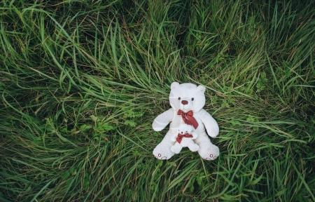 white teddy bears on the green grass. top view.