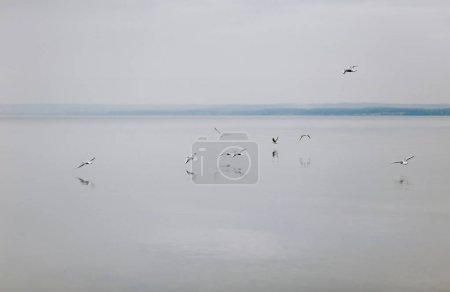 Seagulls fly over water at daytime