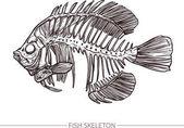 Sketch of Fish Skeleton