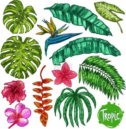Illustration pour Ensemble de feuilles tropicales et de fleurs dessinées à la main. Collection botanique dans le style croquis - image libre de droit