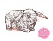 Hand Drawn Happy Easter Rabbit Sketch Greeting Vector Illustration