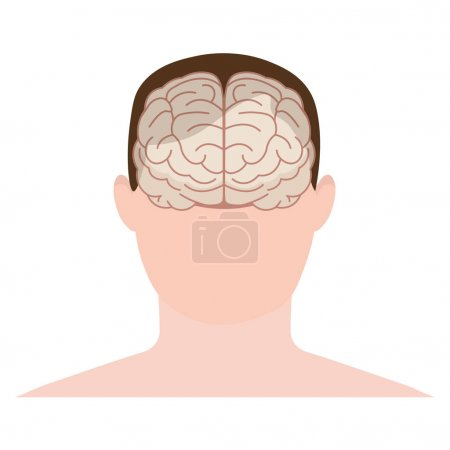 Head human, face and brain in flat style. Vector illustration. Front view