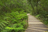 Path through rainforest in the Garden Route NP, South Africa