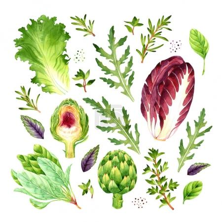 Isolated watercolor vegetables set