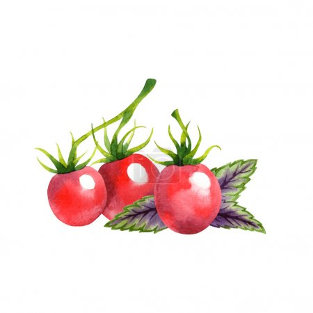Isolated watercolor tomatoes