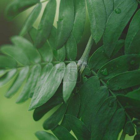 Closeup shot of tropical green leaves. Macro shot. Summer background