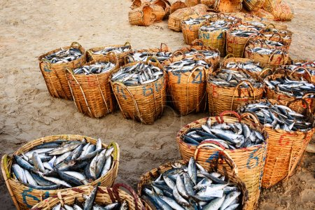 Traditional fish market on the beach in Long Hai, Vung Tau, Vietnam. This market only happens in early morning.