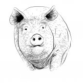 Pig swine hog sow piggy piglet piggie pigling brawn boar grown big cute eco farm animal snout Vector square beautiful closeup front frontal view black outline illustration isolated white background