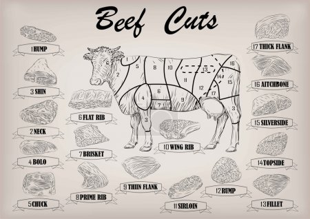 Beef cow bull whole carcass cuts cut parts infographics scheme sign signboard poster butchers guide: neck, chunk, brisket fillet rump. Vector beautiful horizontal closeup black outline beige background
