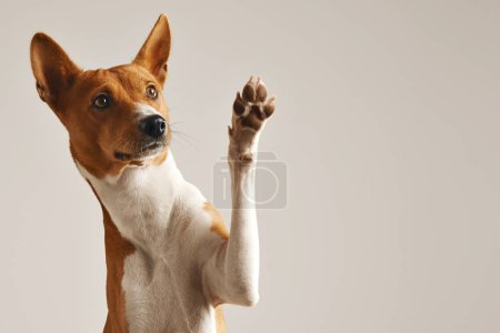 Cute dog giving his paw