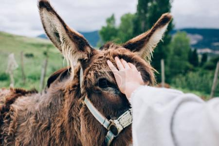 Photo for Female hand patting little cute donkey in countryside - Royalty Free Image