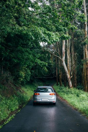 Car on empty forest road