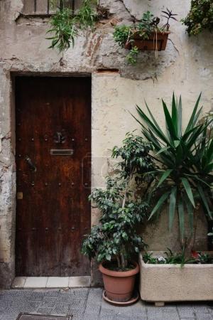 Plants on facade