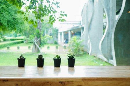 Photo pour Plante verte dans un pot de fleurs sur un bureau en bois. - image libre de droit