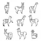 Vector illustration Cute character lama