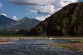 Wandering horses across the river.