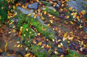 Forest stream with mossed stones and autumn leaves