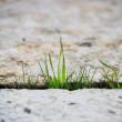A small green blade of grass sprouts between two g...