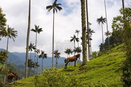 Photo pour Vue de la vallée de Cocora (Valle del Cocora) avec des palmiers à cire et des chevaux ; Concept pour voyager en Colombie et en Amérique du Sud - image libre de droit