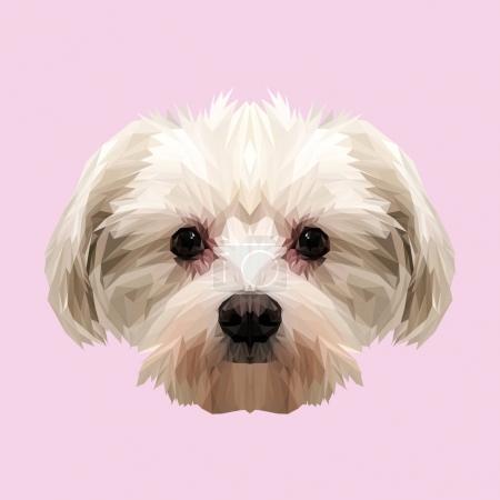 Maltese dog animal low poly design