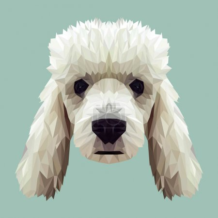 Poodle dog animal low poly design