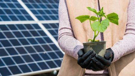 Foto de Agricultor sostiene plántulas en sus manos, en el fondo paneles solares. - Imagen libre de derechos