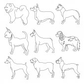 Set of purebred dogs in linear style