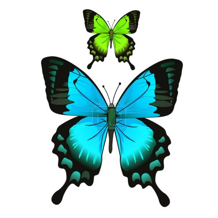 Bright beautiful blue and green butterfly